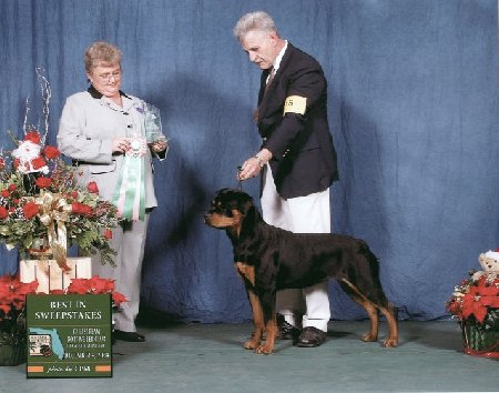 Best in Sweepstakes - Gulfstream Rottweiler Club Specialty